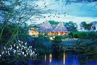 Finch Hattons Safari Camp 5*